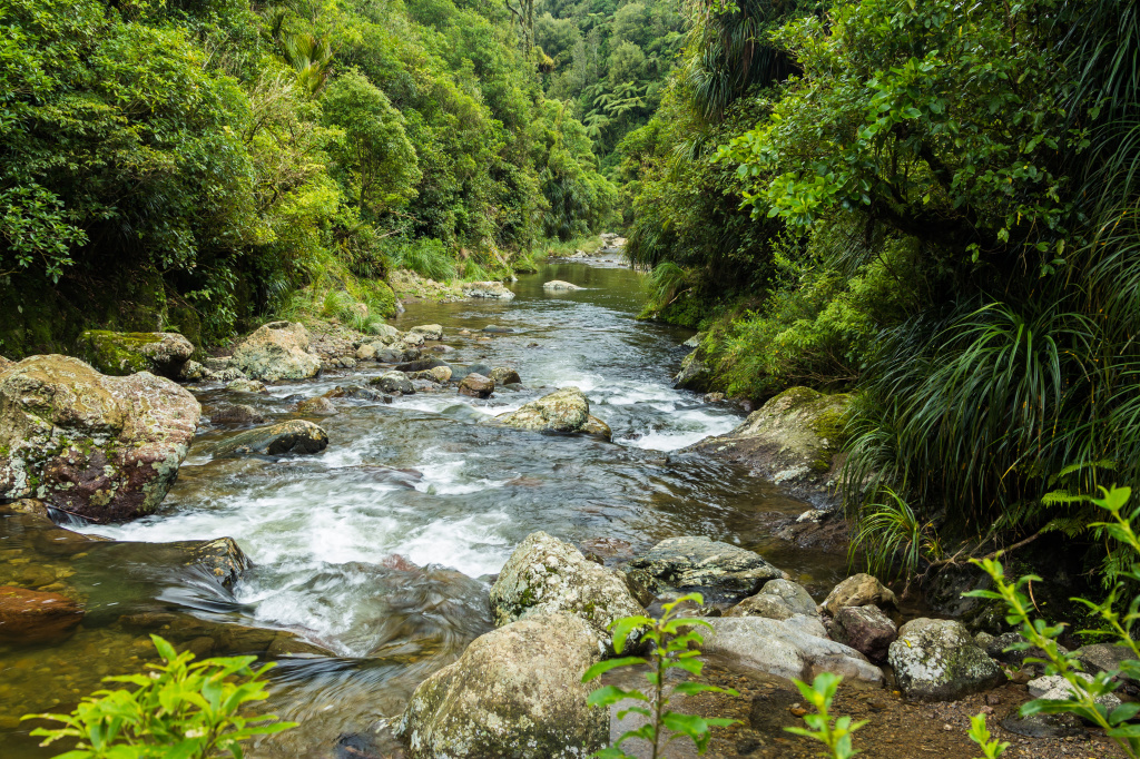 Kahuterawa Stream